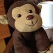 Identifying a Stuffed Monkey - cute stuffed monkey