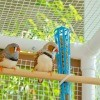 Two finches sitting on a rod in their cage.