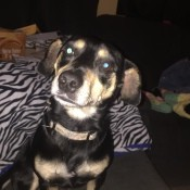 What Breed Is My Dog? - black and tan dog