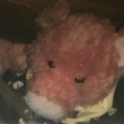 Identifying a Stuffed Toy Pig - closeup of the head