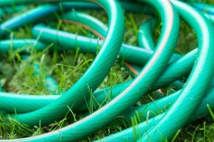 A garden hose on the lawn.