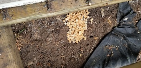 Identifying Insect Eggs Found Under a Deck