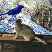 A cat in front of a television screen showing wild birds.