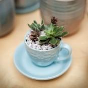 A succulent planted a teacup.
