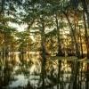 A Louisiana swamp.