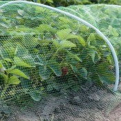 Plants under a protective screen.