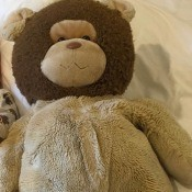 Identifying a Stuffed Bear - stuffed bear with a dark brown head and lighter tan ears and body