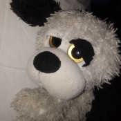 Identifying a Stuffed Animal - closeup of what appears to be a black and white stuffed dog