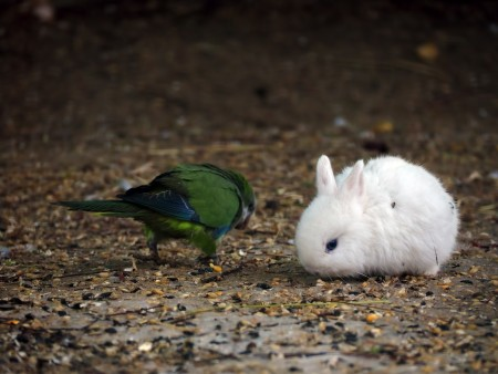 bunny and parrot eating seeds