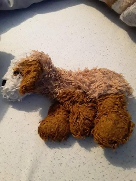 Identifying a Stuffed Dog?