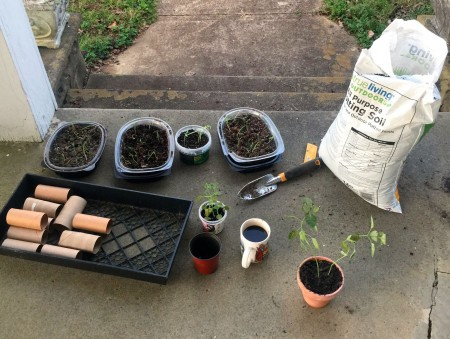 A collection of toilet paper rolls and other potting supplies.