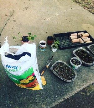 A bag of potting soil, seedlings in plastic containers and a nursery tray with TP tubes