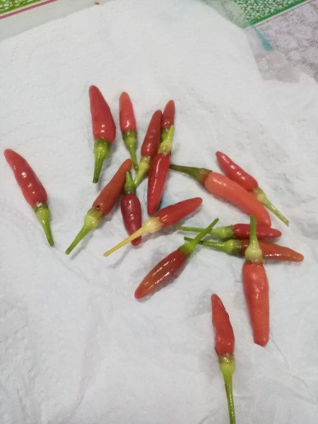 A collection of small red chili peppers.