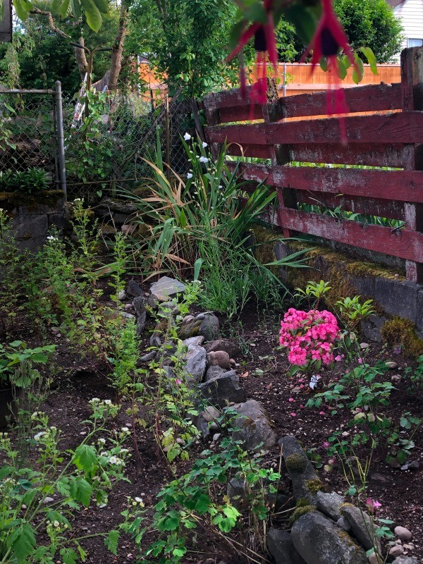 New Plantings and Garden Flowers