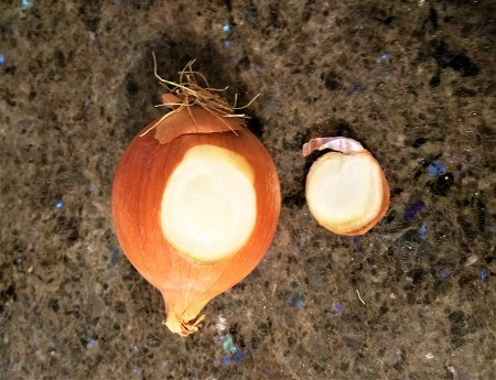 An onion with a slice out of the side.