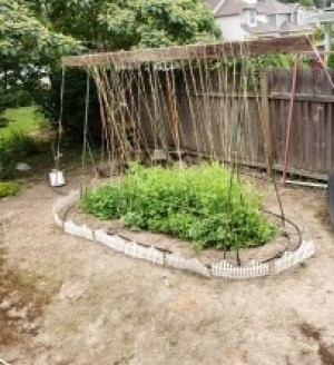 Crafty Pea Trellis - finished trellis