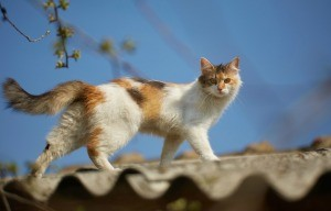 A cat walking on a roof.