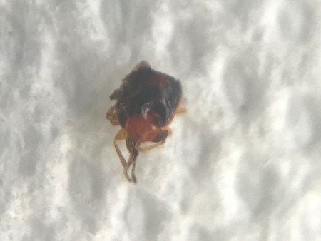 A small bug on a white background.