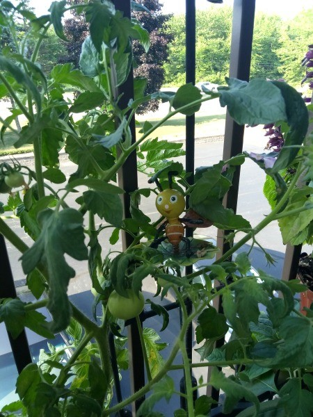 Bee-utiful Tomatoes - tomato plant with a cute bee plant stake
