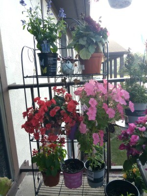 Plant Stand for Balcony Gardeners