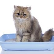 A cat sitting in a litter box.