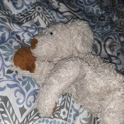 Identifying an Old Stuffed Toy? - white stuffed dog with large brown nose and foot pads
