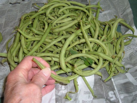 Fresh green beans from the farmer's market.