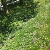 Wildflowers in a grassy field.