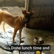 A small dog near a water dish.