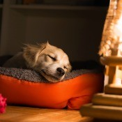 A dog sleeping on a pet bed.