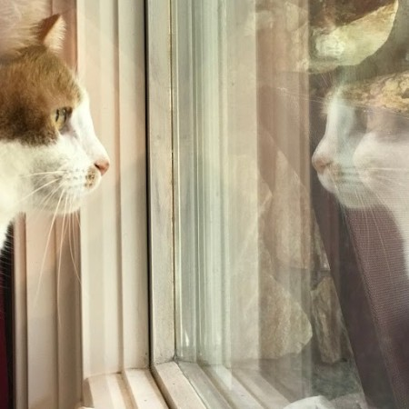 A cat looking at his reflection.