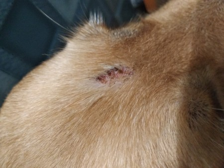 Identifying and Treating Bumps on Dog's Head?
