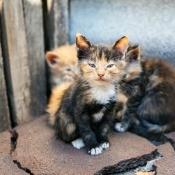 A litter of kittens outside.