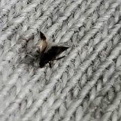 A small winged bug on a woven surface.