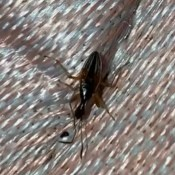 A bug on a woven surface.