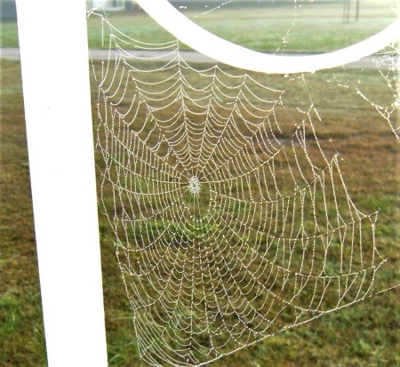 A spider web covered with dew.