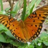 An orange butterfly on a plant.