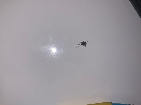 A small mosquito on a white surface.