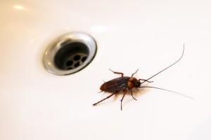 A roach in a sink.