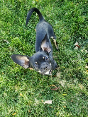 A small dog on grass.