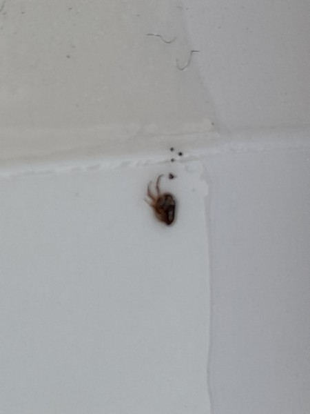 A bug on a white surface.