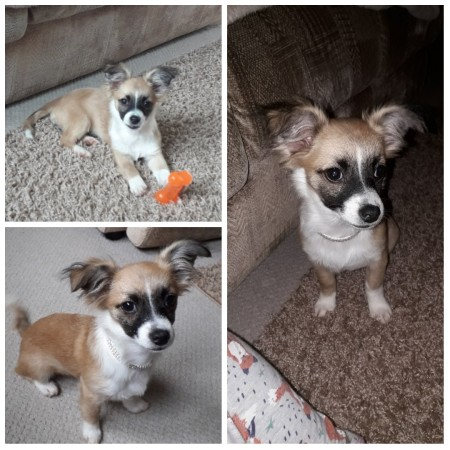 A collection of photos of a small dog.