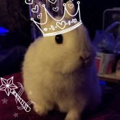 A bunny with an added digital crown.
