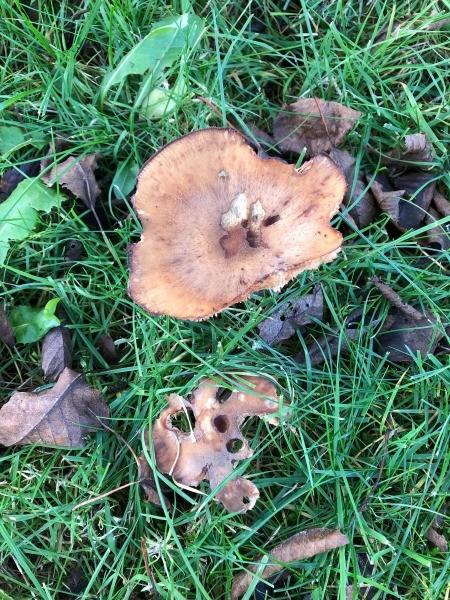 Fungi Photos - irregularly shaped fungi