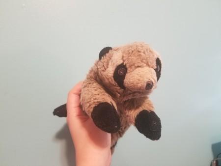 Identifying a Raccoon or Ferret Stuffed Toy?