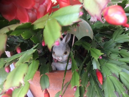 A figurine in a Christmas cactus.