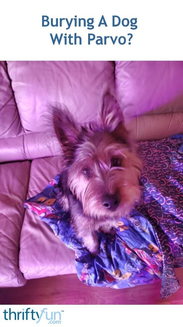 Burying A Dog With Parvo? | ThriftyFun