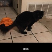 A black cat on a floor.