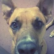 A dog looking up at the camera.