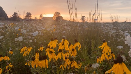 Wildflowers at sunset.